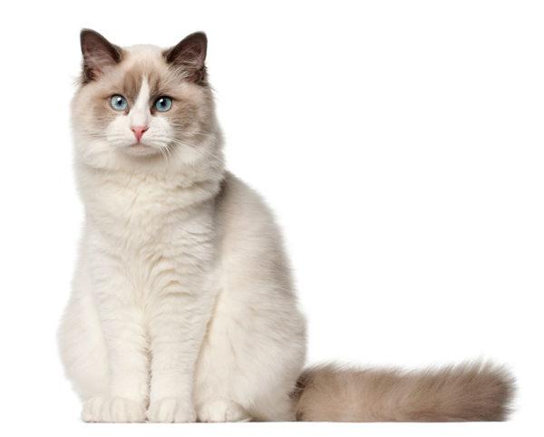 Kat-witte achtergrond