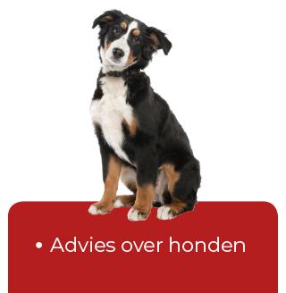 knop-advies-honden
