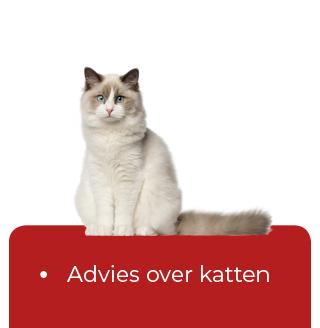 knop-advies-katten